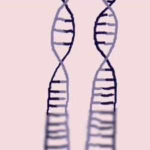 New DNA strands forming