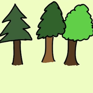A drawing shows three different kinds of trees