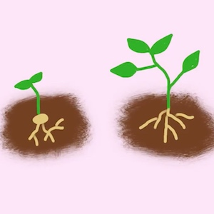 A cartoon drawing shows a seedling growing into a larger plant.