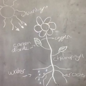 Photosynthesis From Drawings