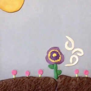 Photosynthesis From Stop Motion
