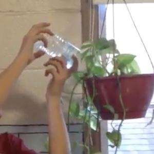 Hands pour a water bottle into a hanging plant