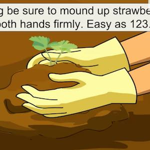 Hands planting a strawberry plant